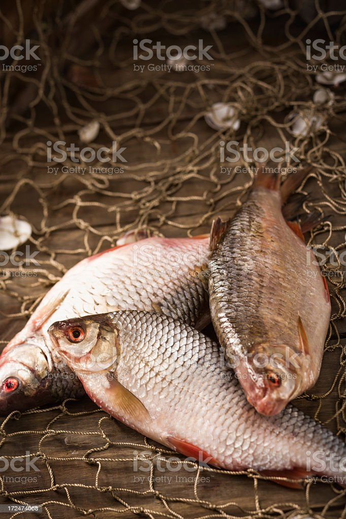 Fresh Catch royalty-free stock photo