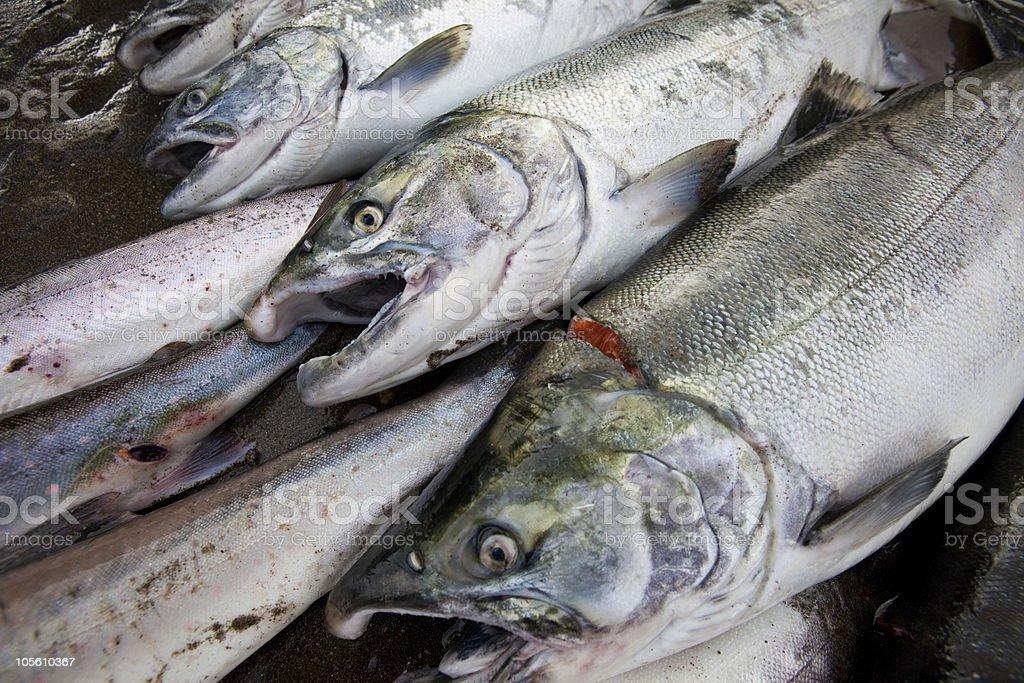 fresh caught fish stock photo