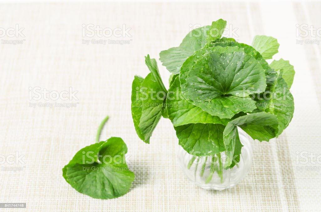 Fresh Centella asiatica stock photo