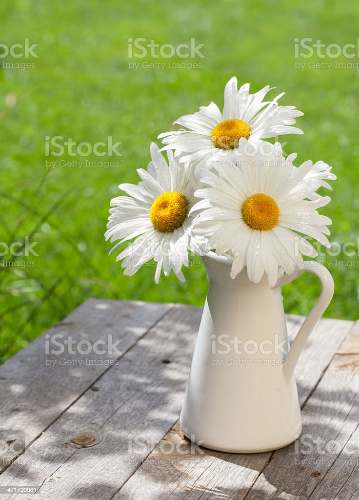 Fresh chamomile bouquet in vase royalty-free stock photo