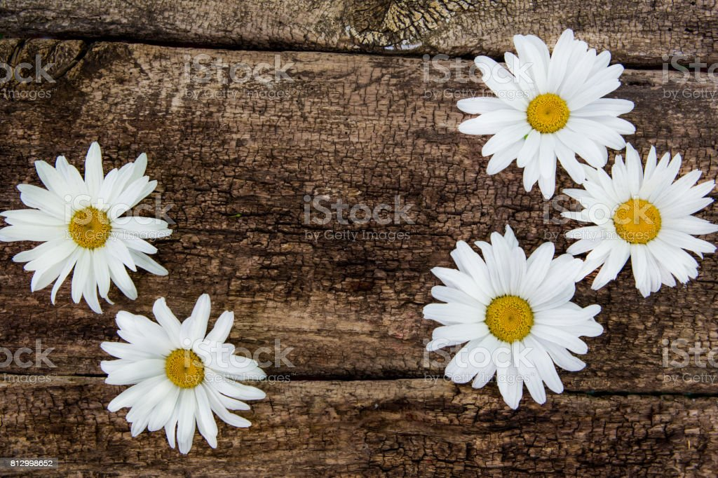 Fresh chamomile flowers on the wooden table. Top view with copy space stock photo