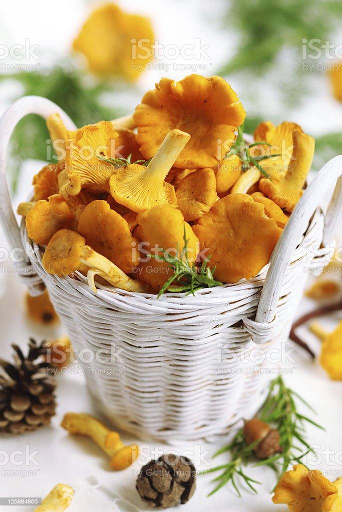 Fresh chanterelle mushrooms in basket on white wooden background stock photo