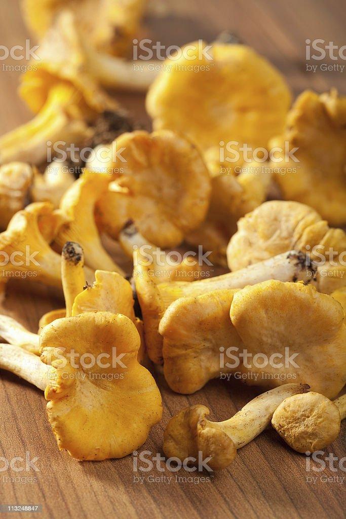 fresh chanterelle mushrooms royalty-free stock photo
