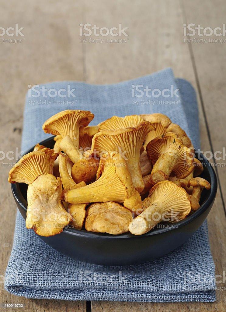 Fresh chanterelle mushrooms stock photo