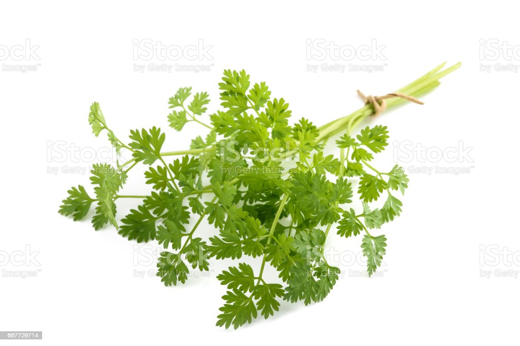 Fresh Chervil bunch stock photo