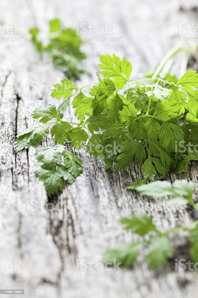 fresh chervil stock photo