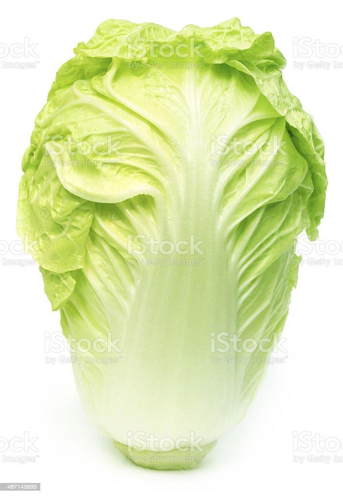 Fresh chinese cabbage stock photo