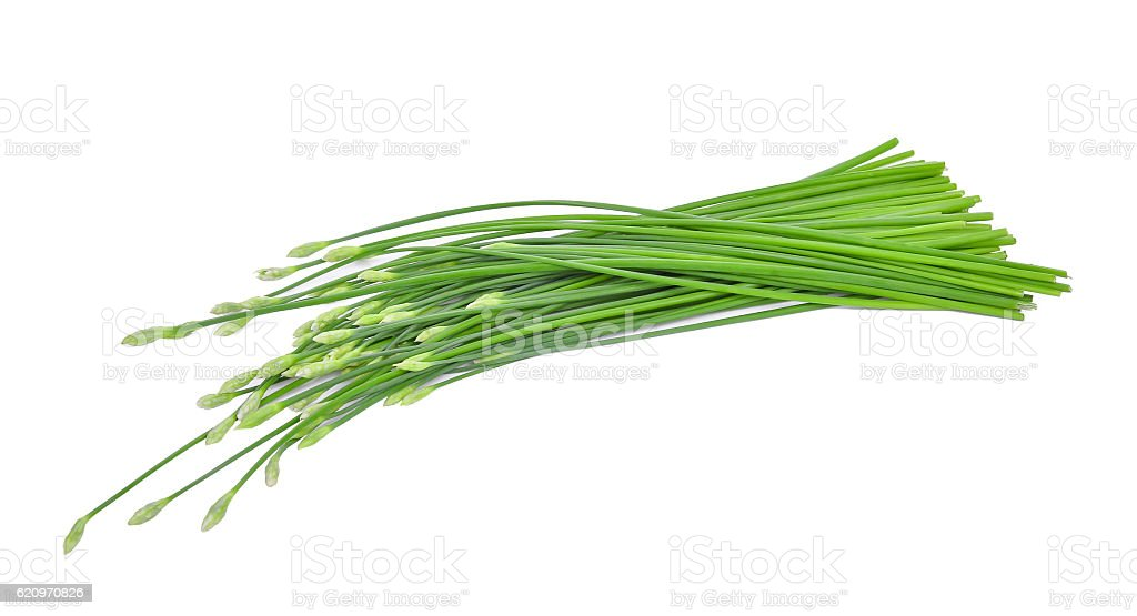 fresh chinese chives isolated on white stock photo