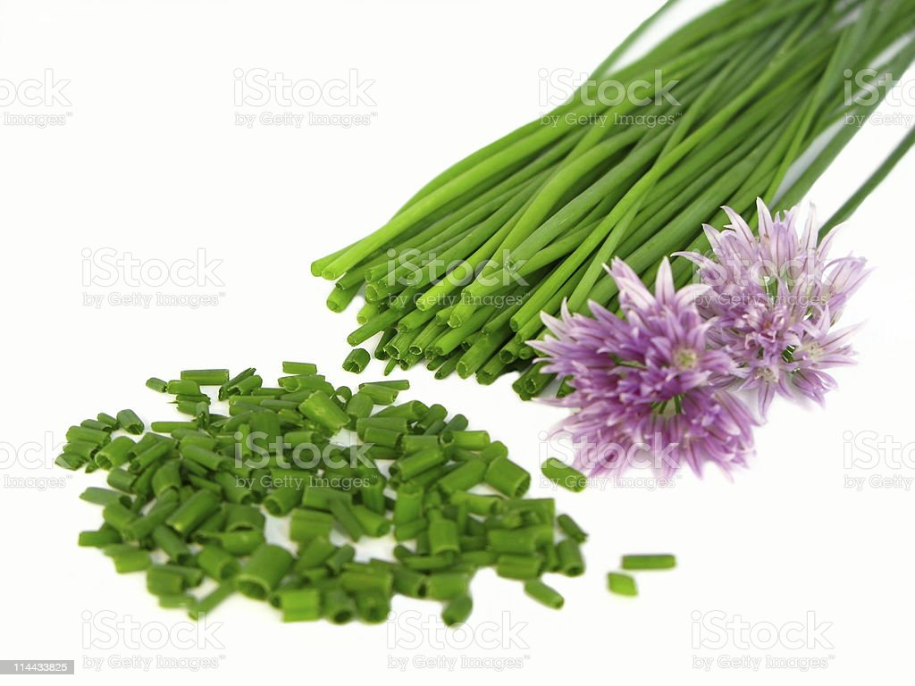 fresh chives and blossoms stock photo
