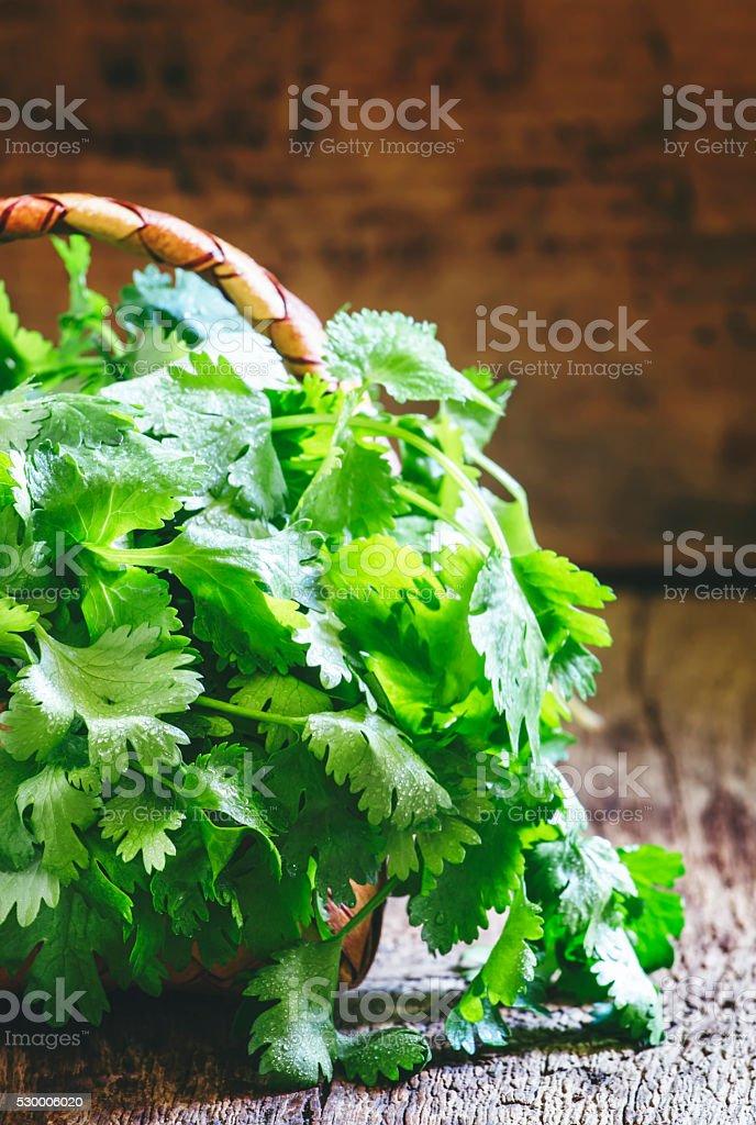Fresh cilantro in a wicker basket, vintage wooden background stock photo