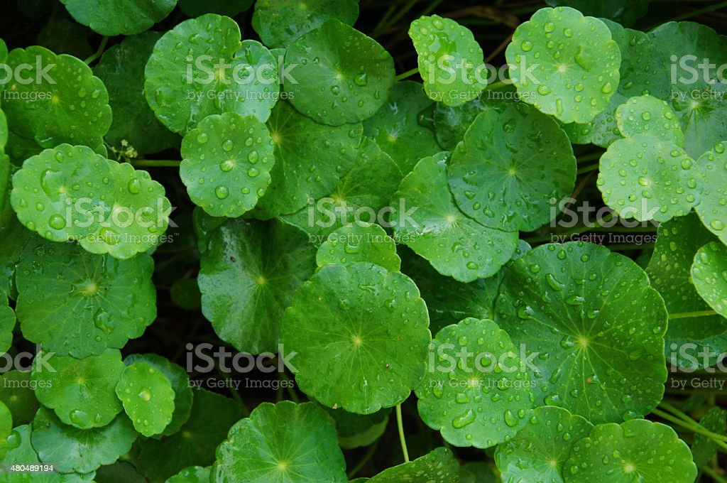 fresh circle leaves texture background stock photo