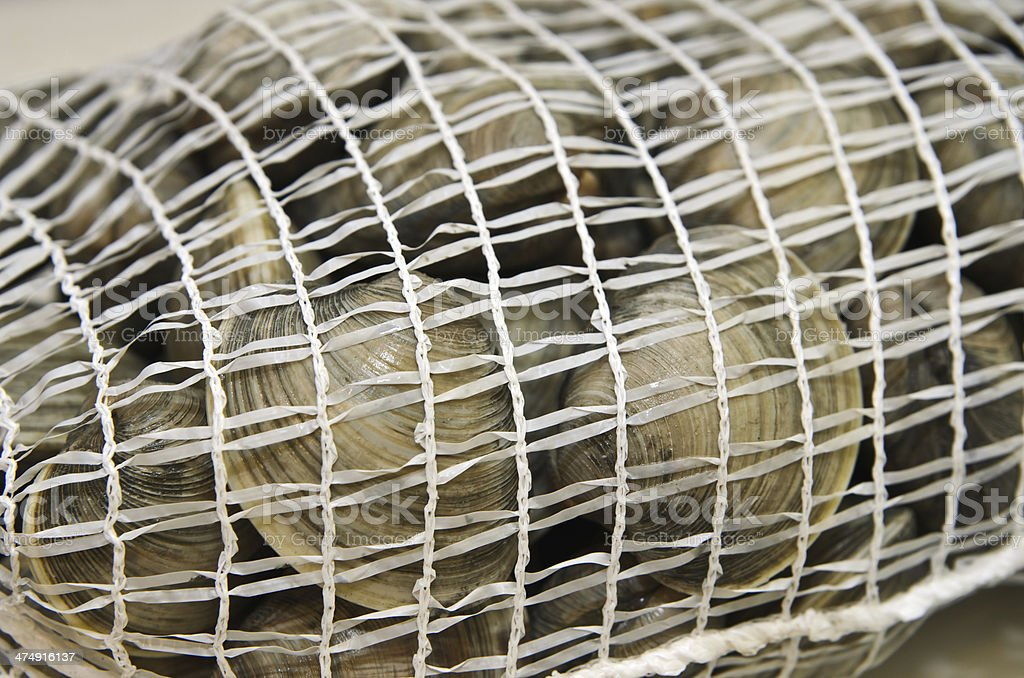 Fresh clams in mesh seafood bag royalty-free stock photo