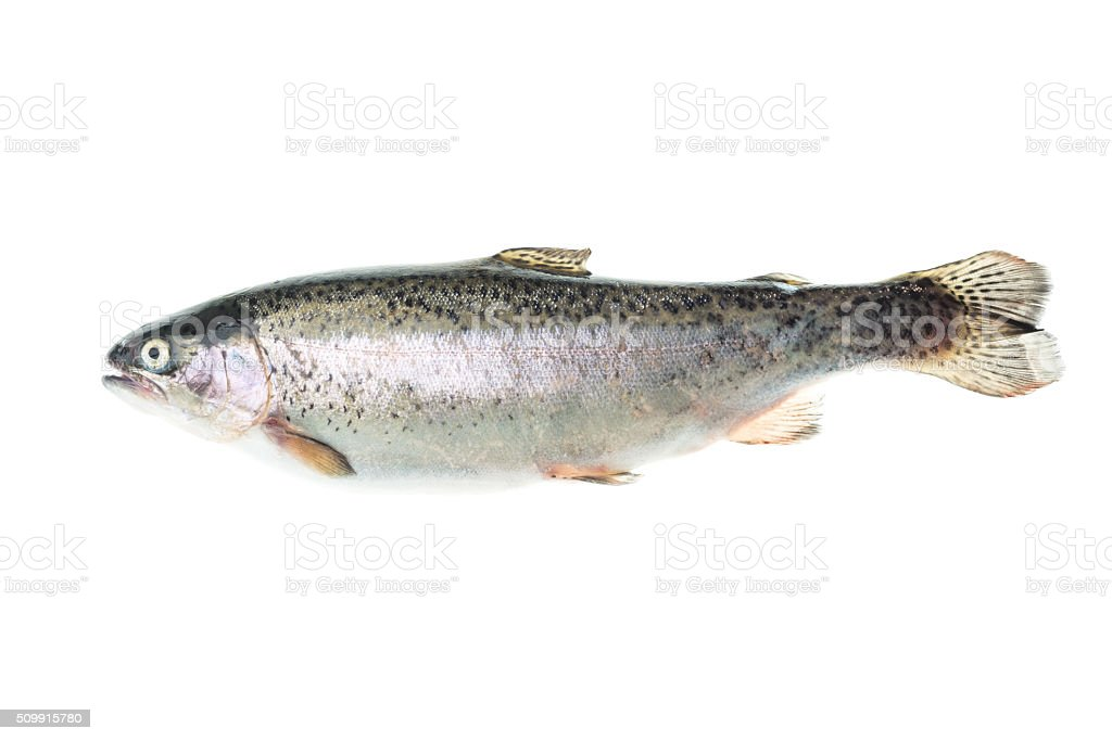 Fresh cleaned raw rainbow trout stock photo