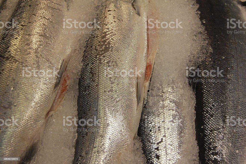 Fresh Cleaned Salmon stock photo