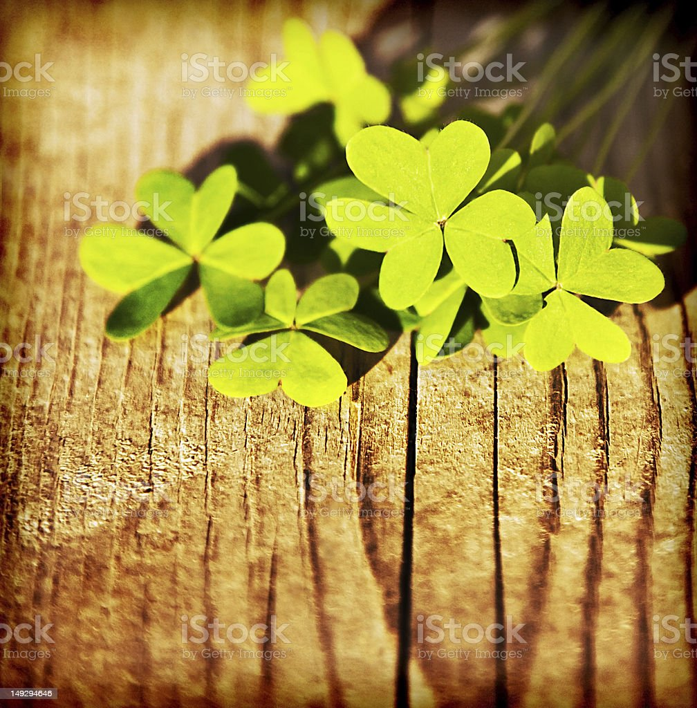 Fresh clover leaves on wood with shadows and vintage filter stock photo