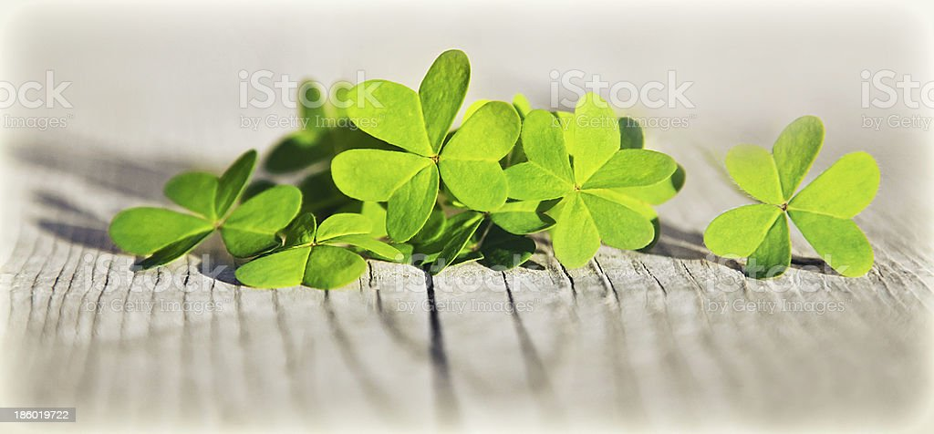Fresh clover leaves over wooden background royalty-free stock photo