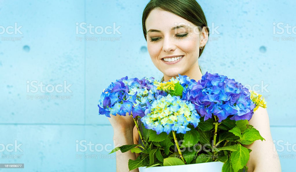 Fresh colorful hydrangeas: spring is here royalty-free stock photo