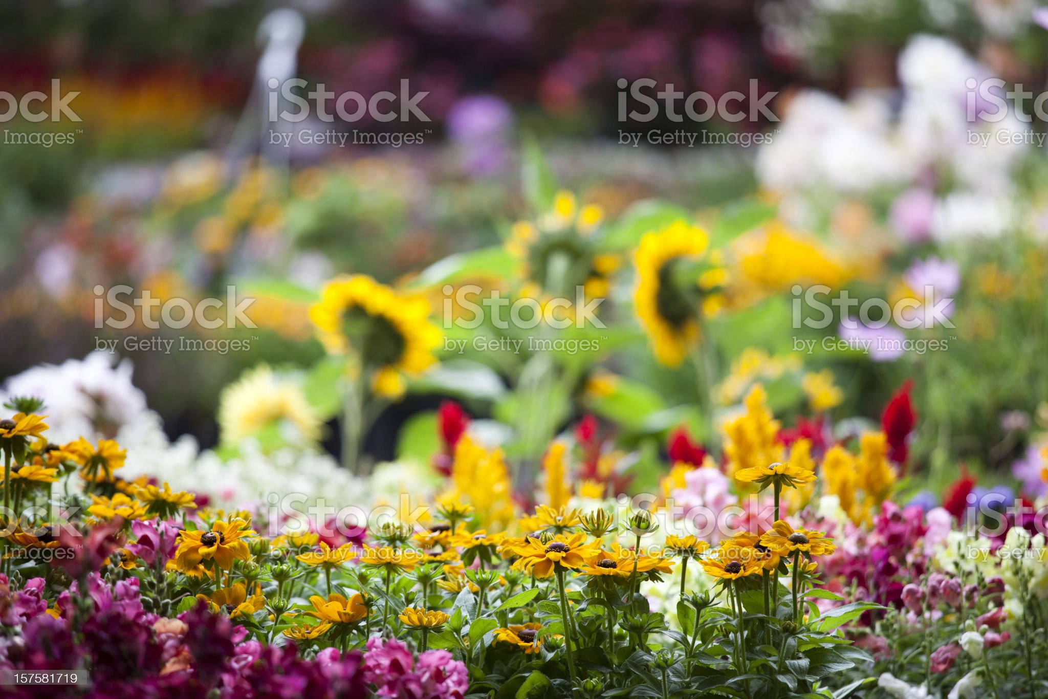 Fresh colorful spring flowers in garden center plant nursery royalty-free stock photo