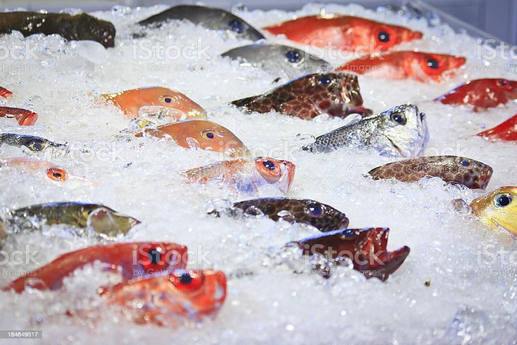 Fresh colorful tropical fish at the market, Taiwan stock photo