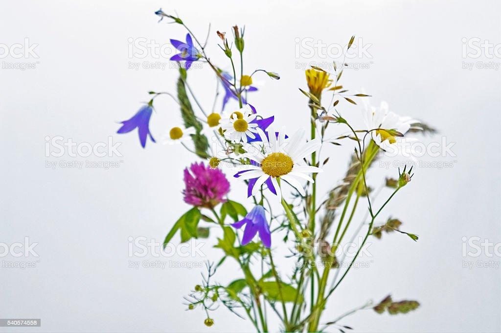 fresh colorful wild flowers on white stock photo
