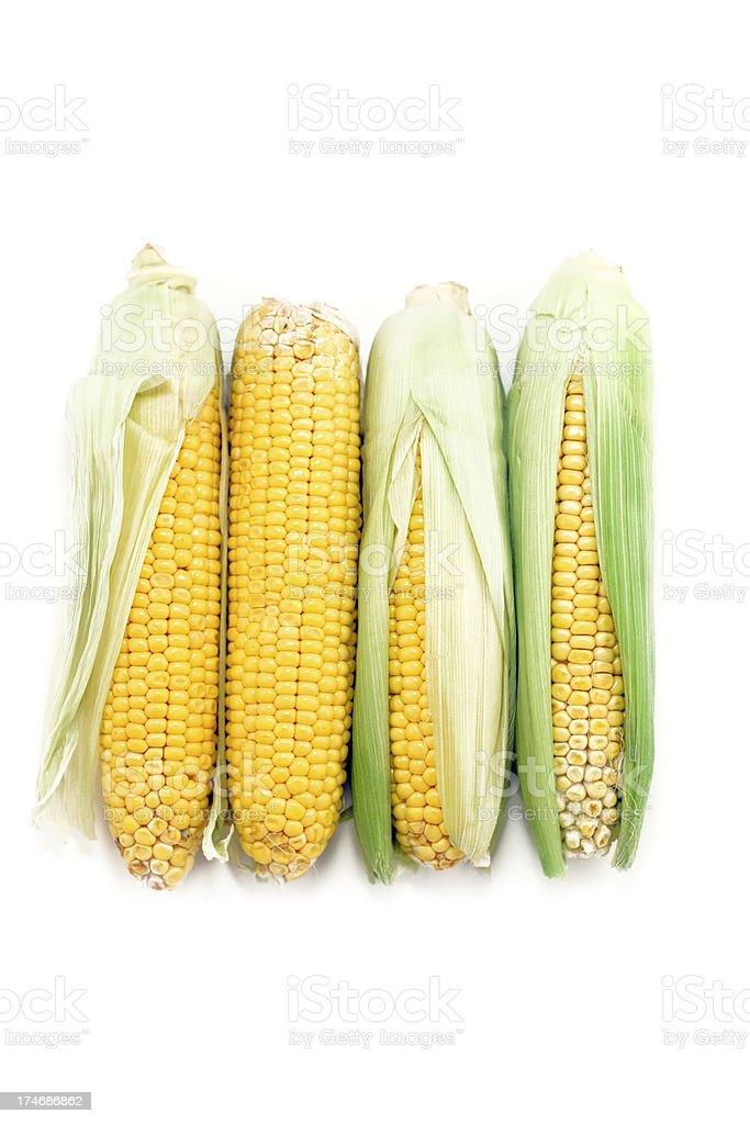 fresh corn ears on white (xxxl) royalty-free stock photo