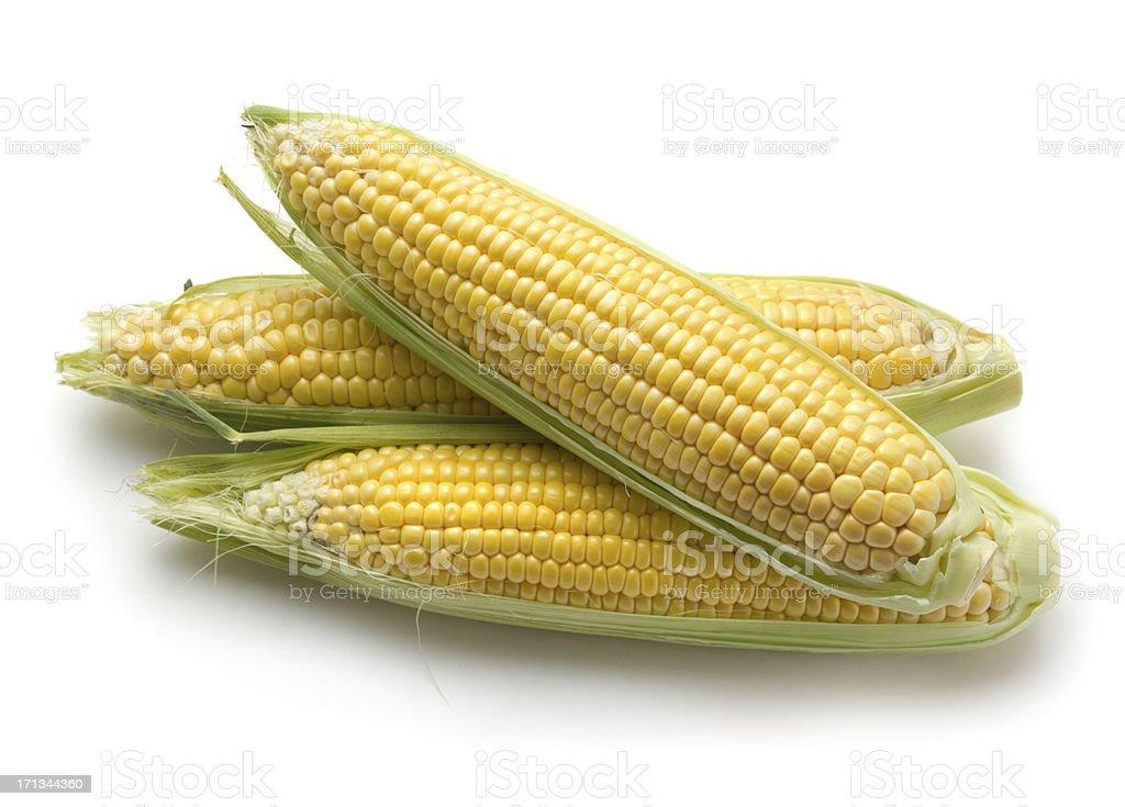 Fresh corn ears stock photo