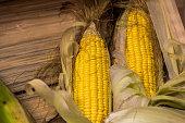 fresh corn from farm