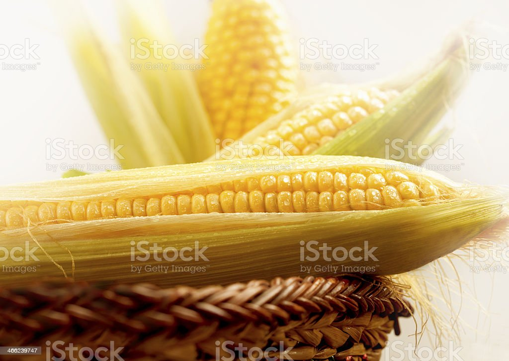 Fresh corn in basket royalty-free stock photo