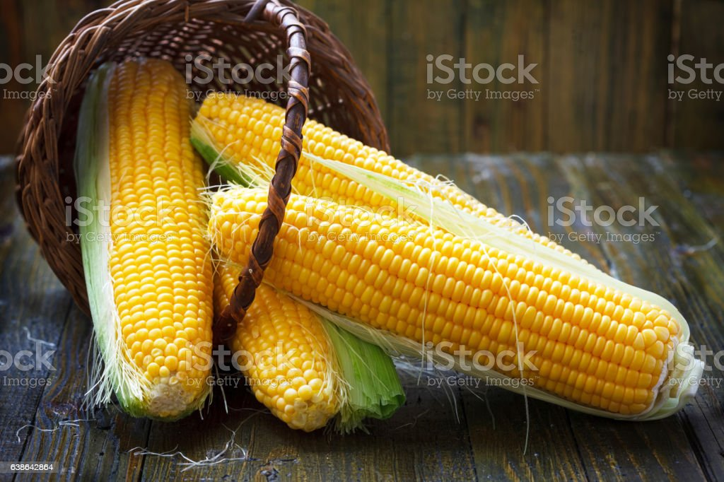 Fresh corn on cobs stock photo