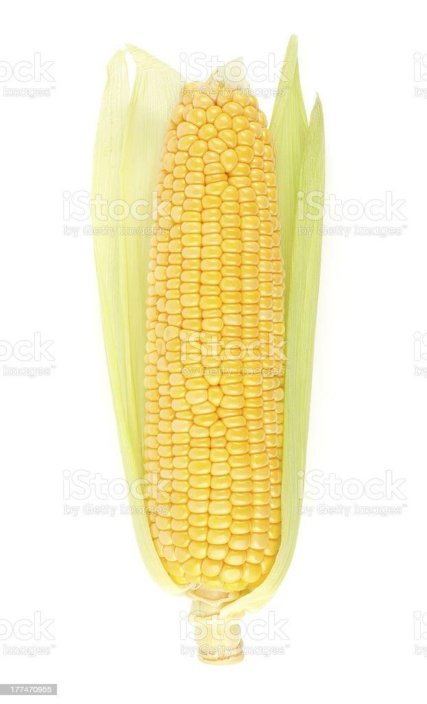 Fresh Corn on the Cob royalty-free stock photo