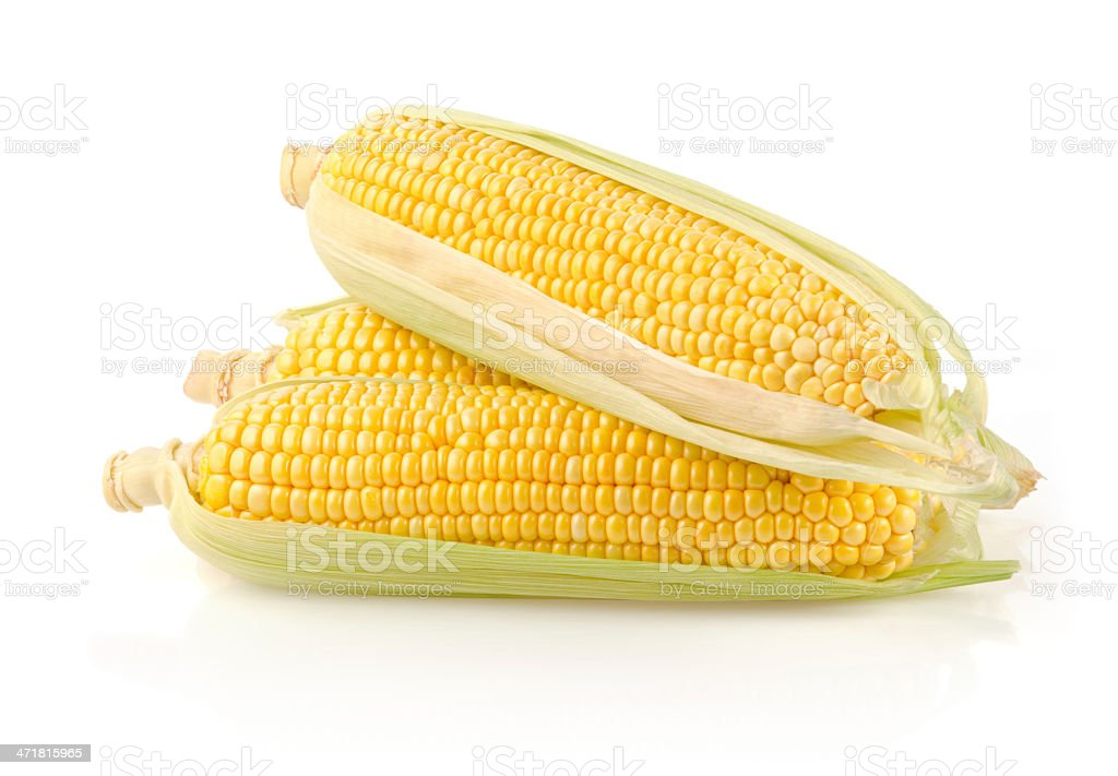Fresh Corn on the Cob royalty-free stock photo