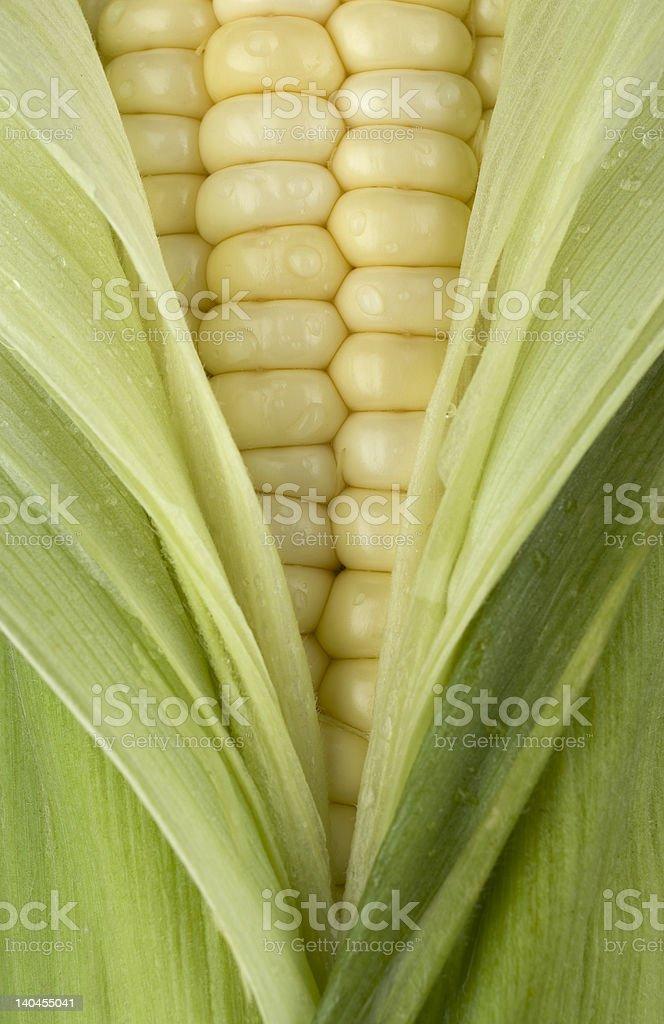 Fresh Corn. royalty-free stock photo