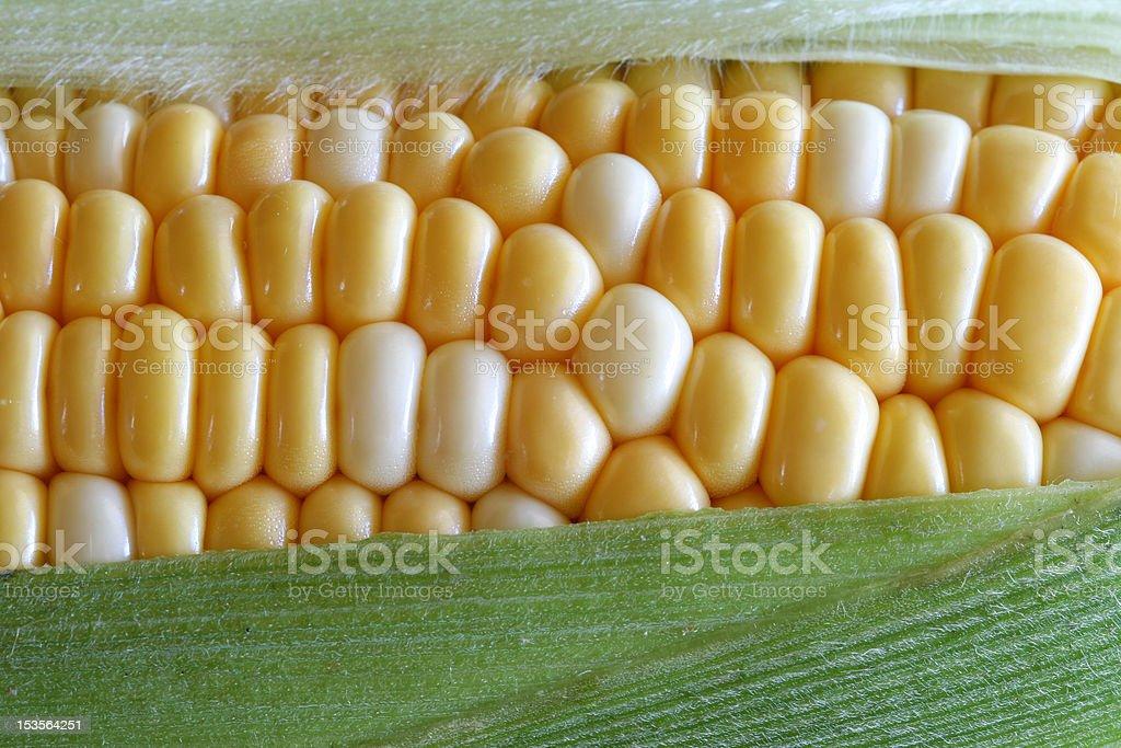 Fresh Corn stock photo