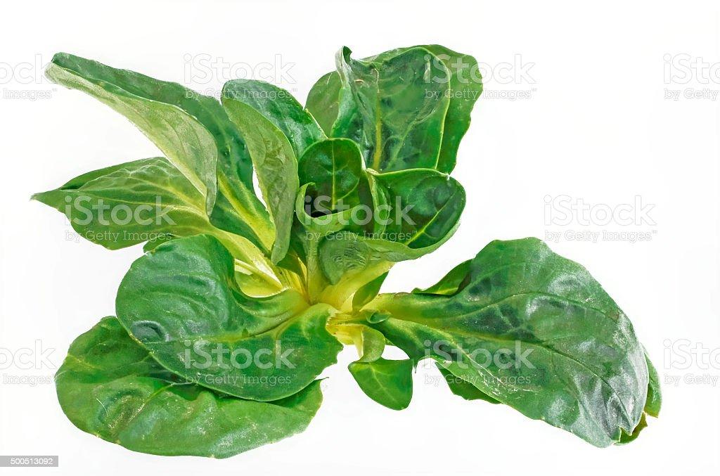fresh corn salad Cut stock photo