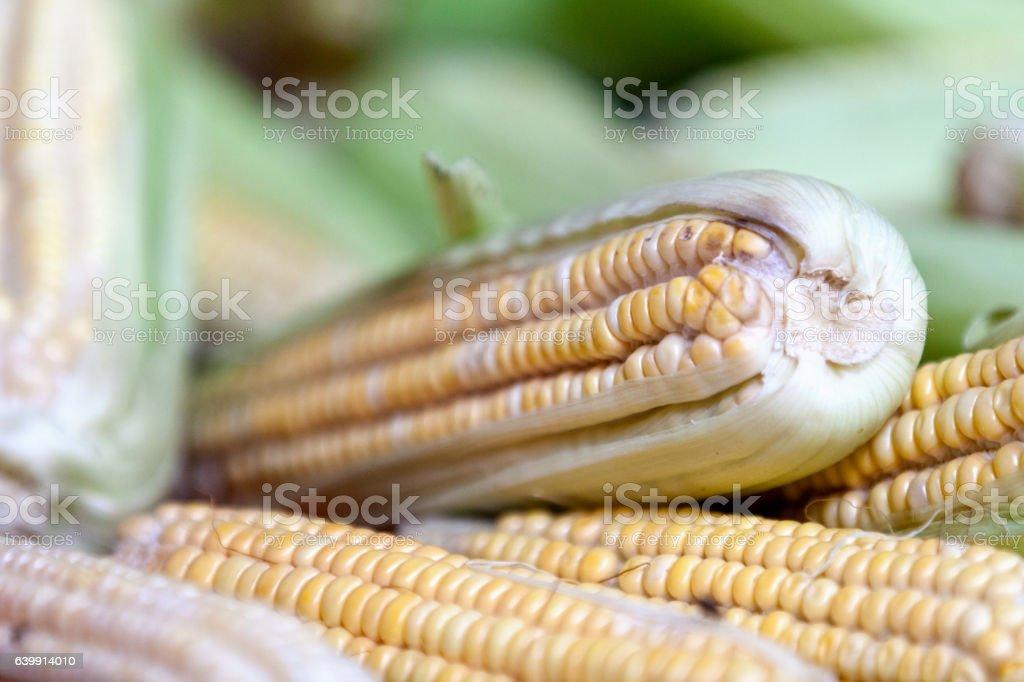 Fresh corns background stock photo