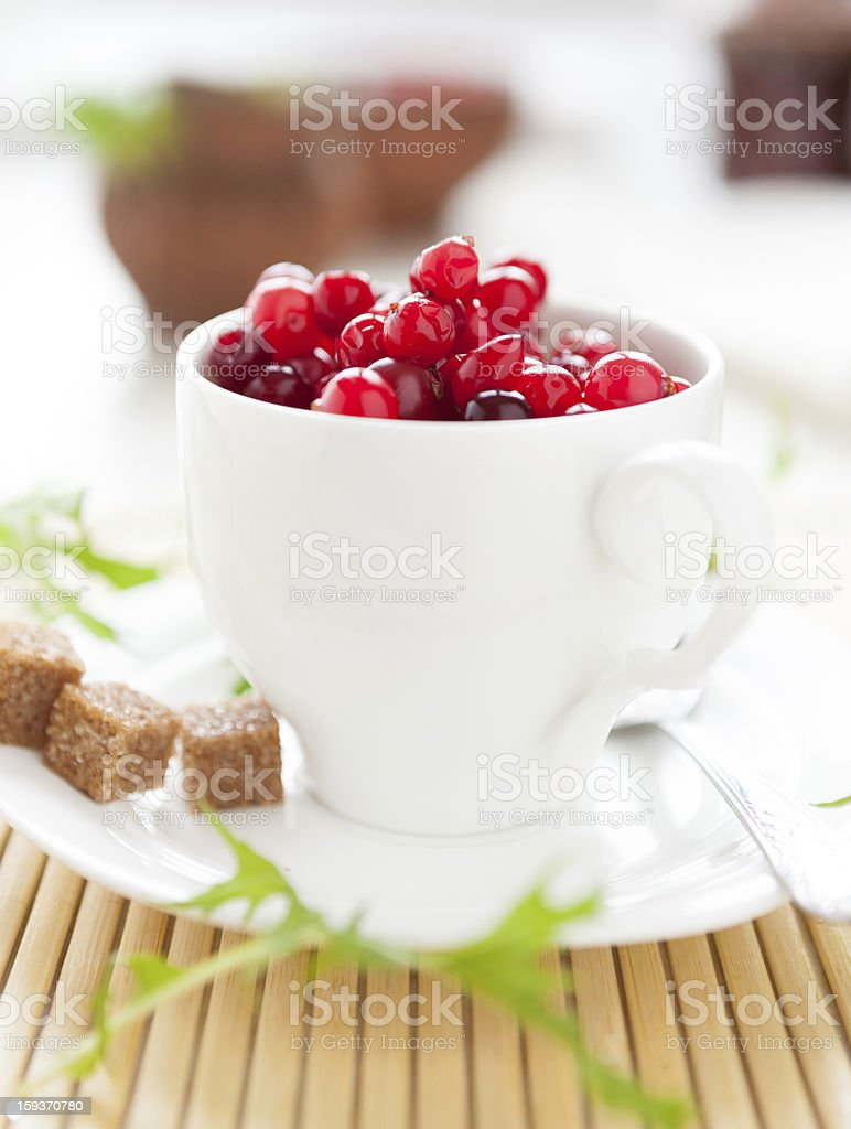 Fresh cranberries in a white cup and saucer royalty-free stock photo
