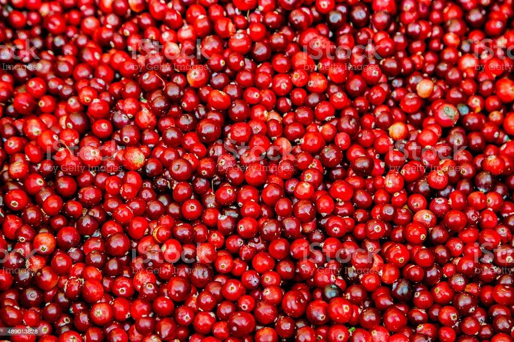 Fresh Cranberry stock photo