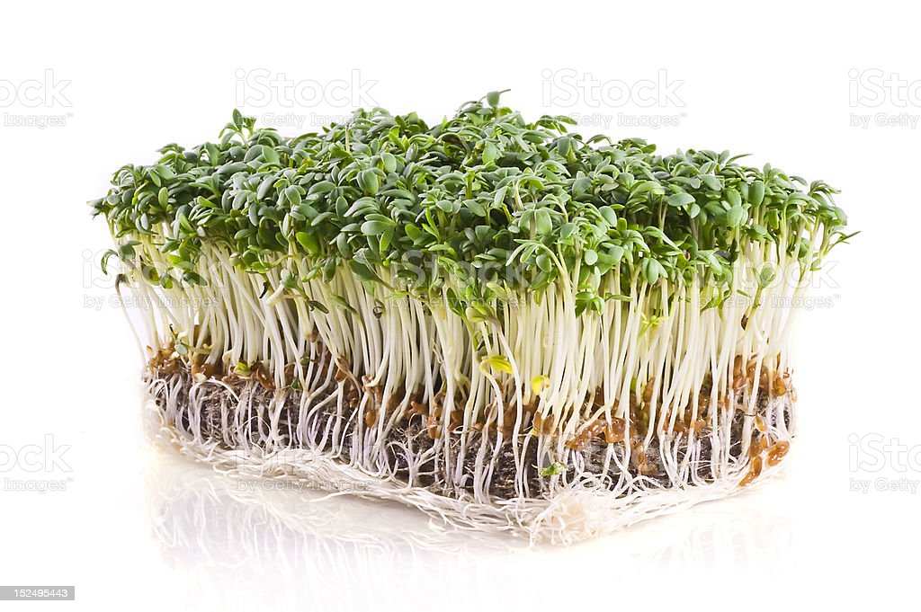 Fresh cress. stock photo