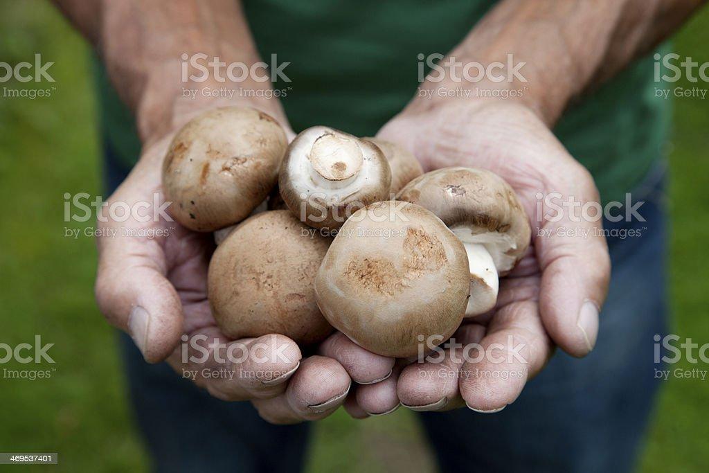 Fresh crop of mushrooms stock photo
