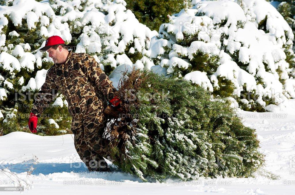 Fresh Cut Christmas Tree royalty-free stock photo