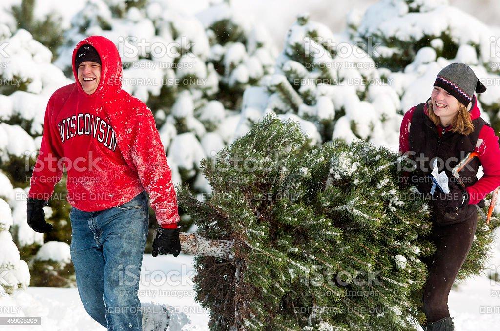 Fresh Cut Christmas Tree stock photo