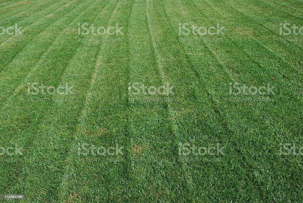 Fresh Cut Grass royalty-free stock photo