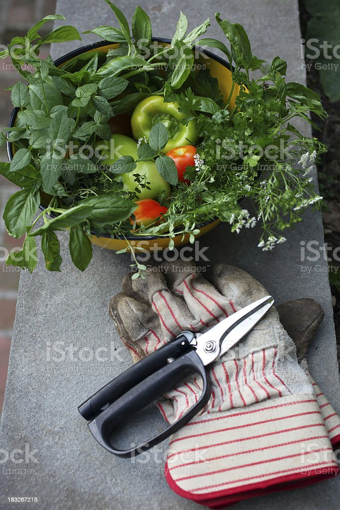 Fresh Cut Herbs and Vegetables royalty-free stock photo