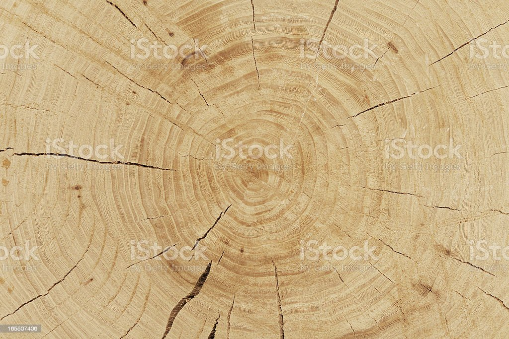 fresh cut log royalty-free stock photo