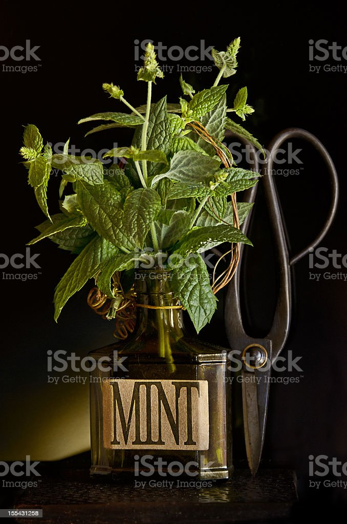 Fresh cut Mint royalty-free stock photo