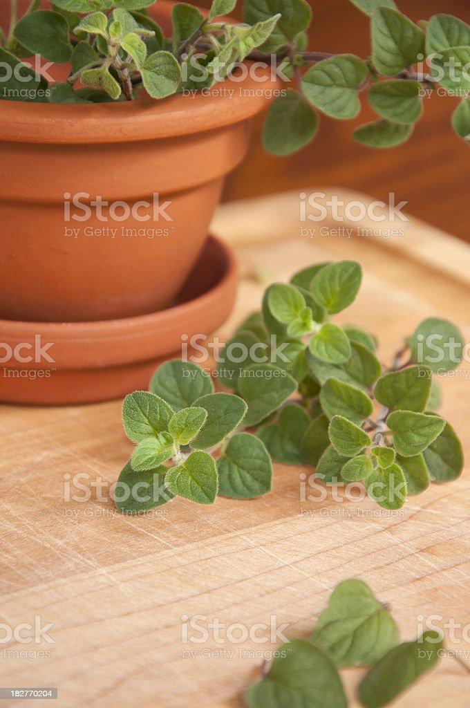 Fresh Cut Oregano Vertical stock photo