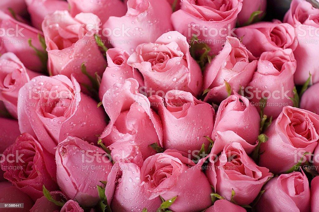 Fresh cut roses royalty-free stock photo