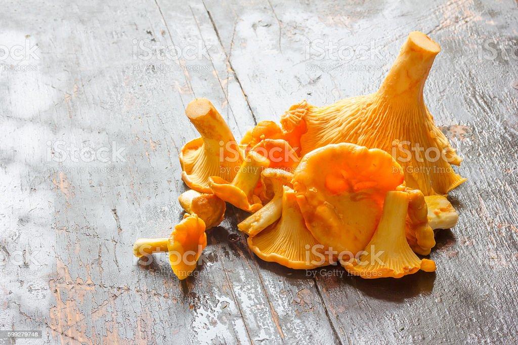 Fresh cut the raw yellow forest mushrooms chanterelles stock photo