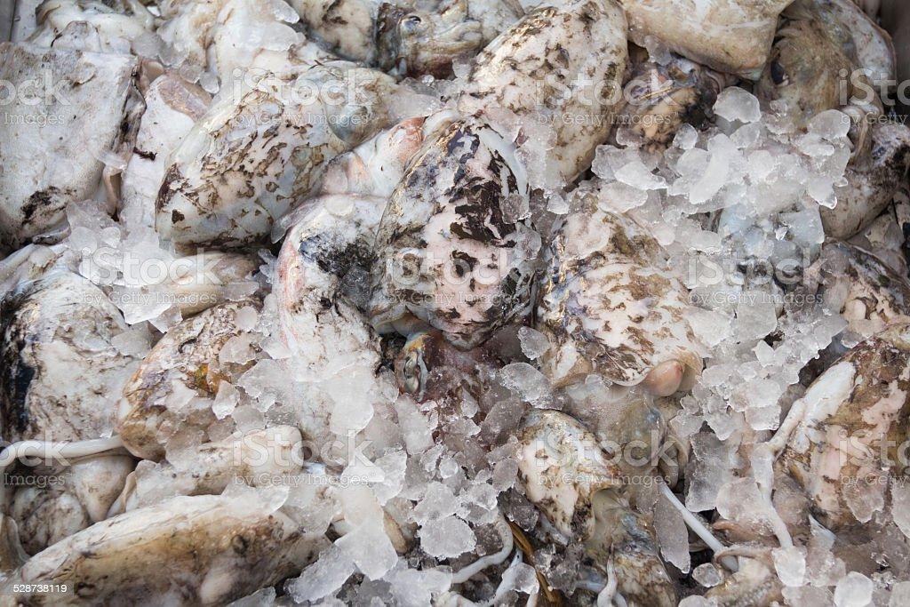 Fresh cuttlefish for sale on Greek island Kalymnos stock photo