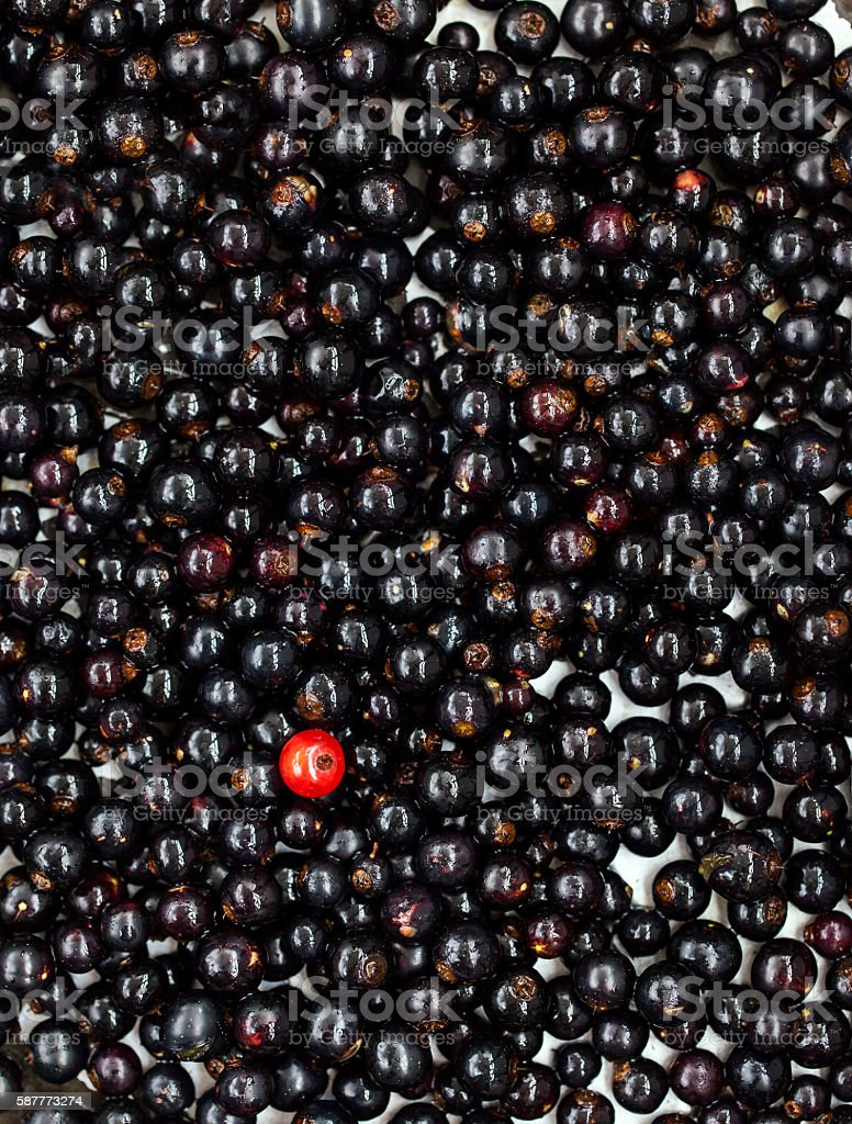 Fresh delicious organic black currant as a background stock photo